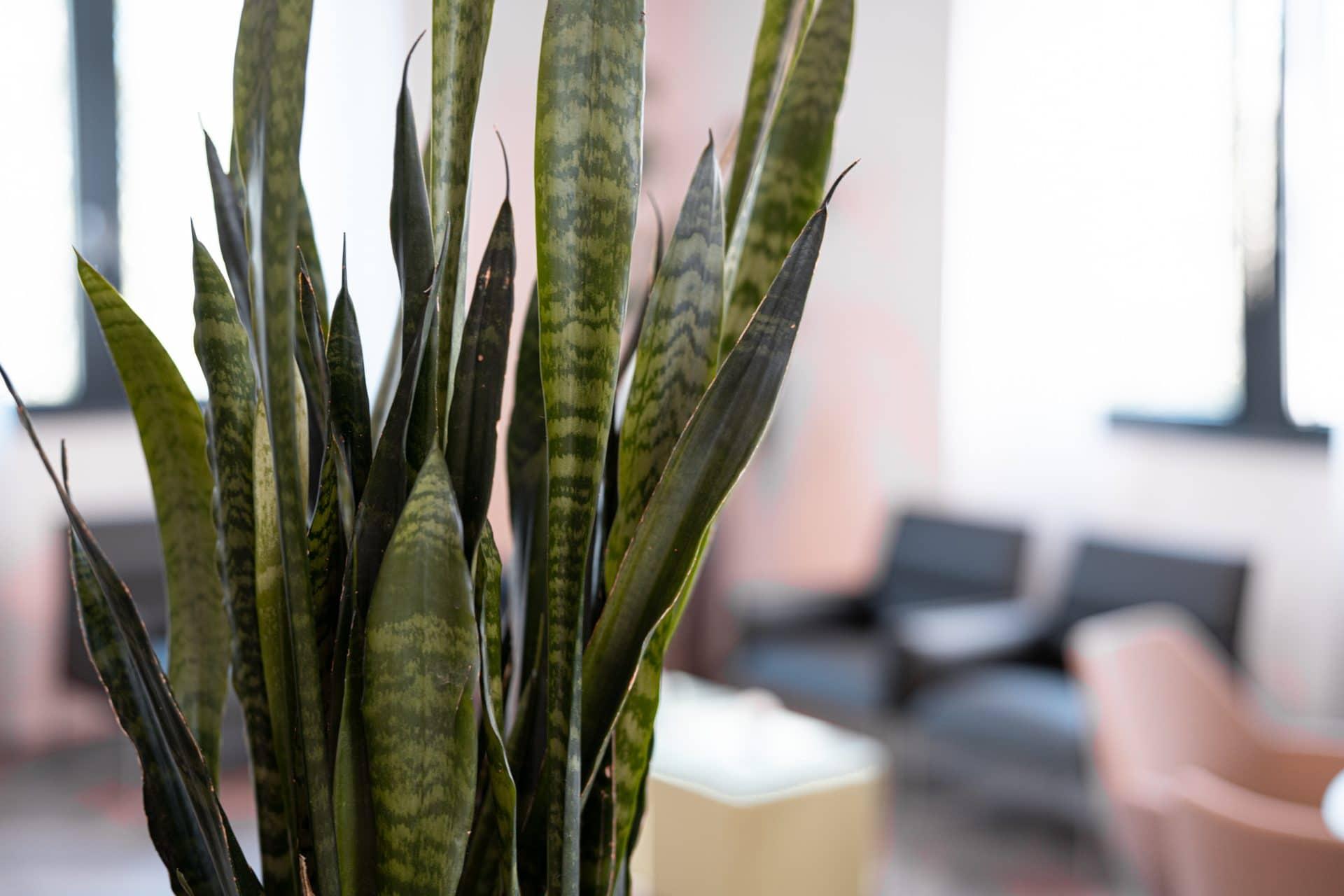 Pflanze im gemütlichen Wartebereich bei nexmed